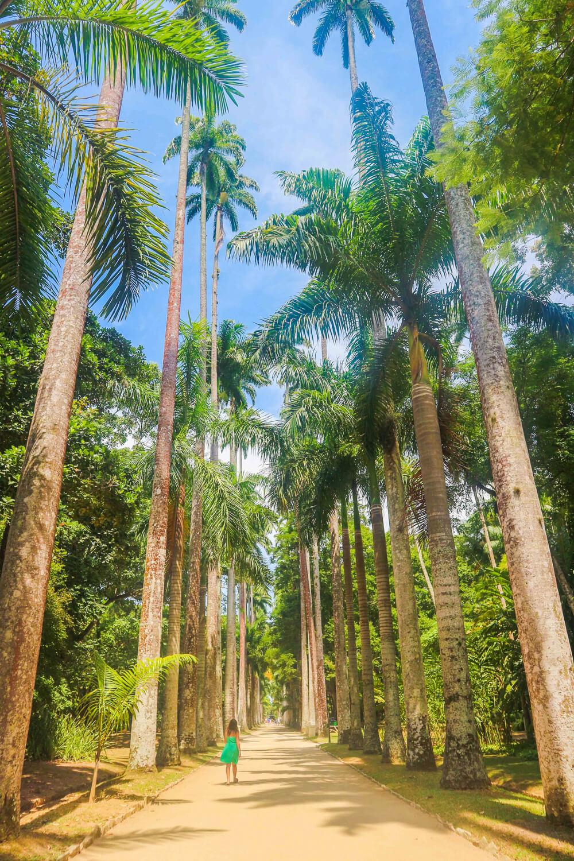 Trees in the Botanic Gardens - hidden gems in Rio