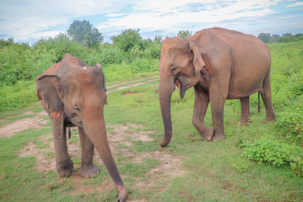 Udawalawe safari, promoting ethical tourism one of our tips for travelling Sri Lanka