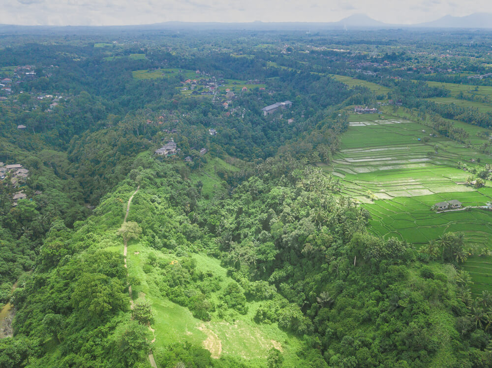 Campuhan Ridge Walk - Ubud guide