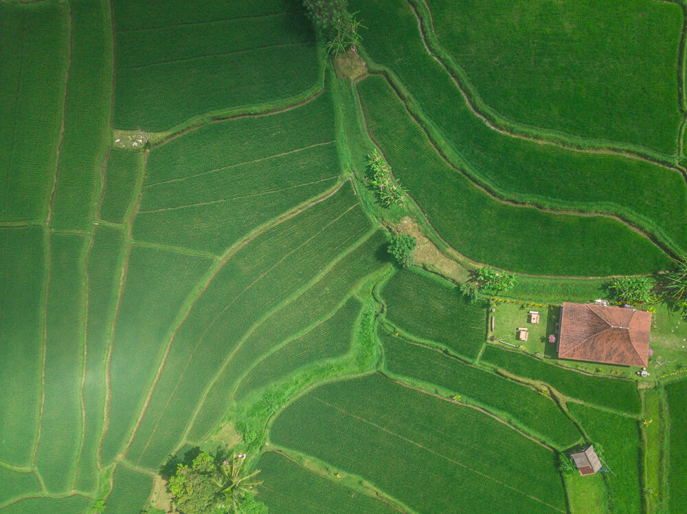 Rice fields from above - Ubud guide