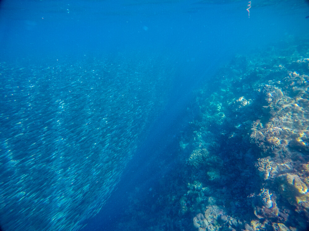 Sardine run at Panagsama beach, Moalboal travel guide