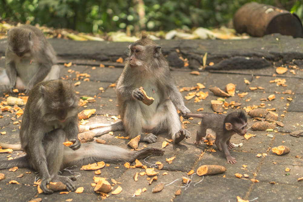 Sacred Monkey Forest in Ubud - 2 week Bali itinerary