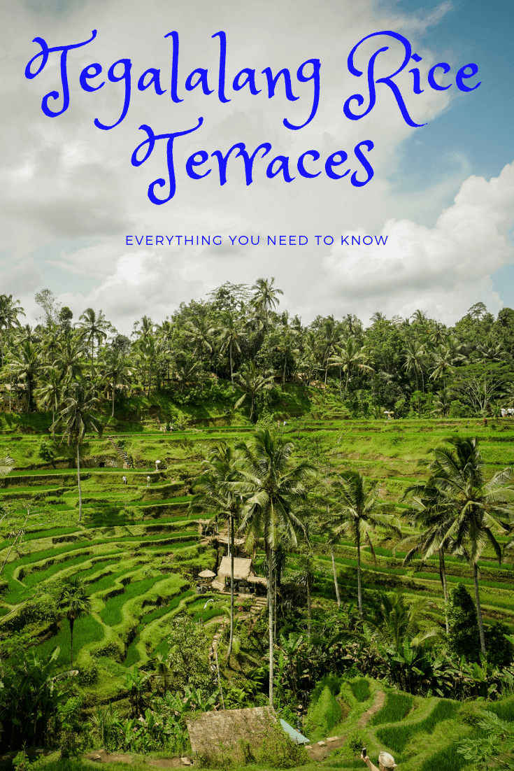 The most famous rice terraces in Bali are the Tegalalang rice terrace. Enjoy the swings overlooking the rice fields, or take a stroll through the shops nearby. There are plenty of photoshoot opportunities here! Don't miss this stop on your travels, read everything you need to know here! #bali #ubud #thingstodoinbali #riceterraces