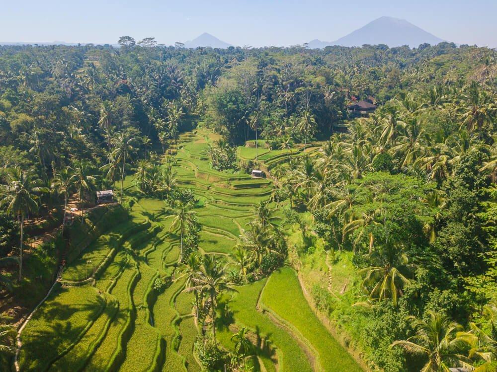 Tegalalang rice terraces - Bali itinerary