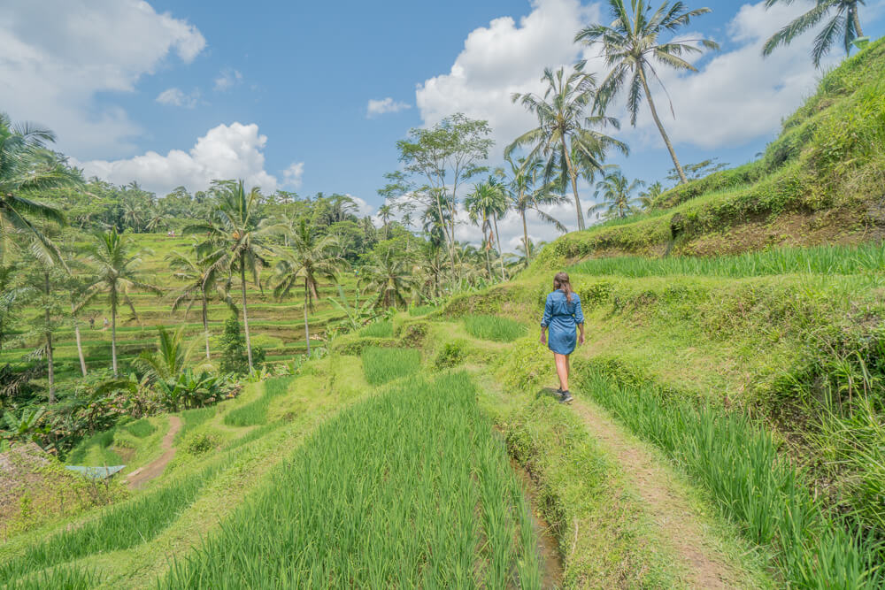 Walking in the Tegalalang Rice Terraces, Ubud, Bali