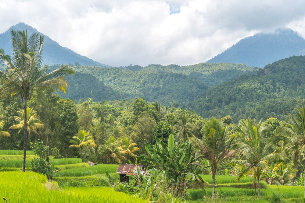 Walking through a rice terrace - things to do in Munduk as part of our 2 week Bali itinerary