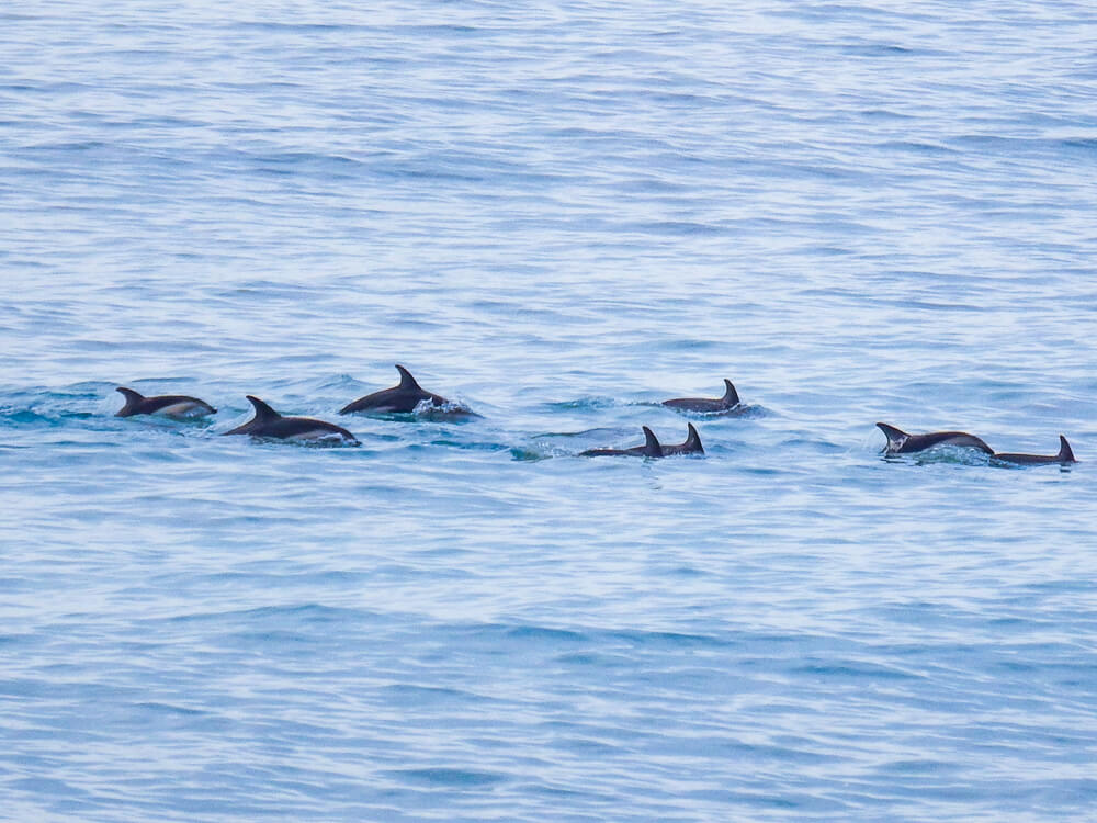 A pod of dolphins, tips for travelling Bali