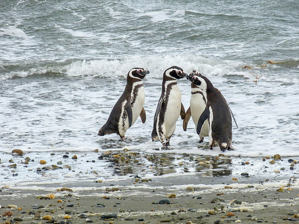 Punta Arenas, Chile - off the beaten path destinations in South America