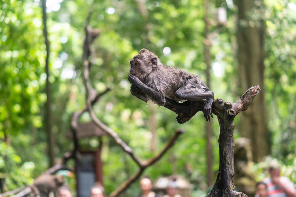 Ubud Monkey Forest - Bali travel tips