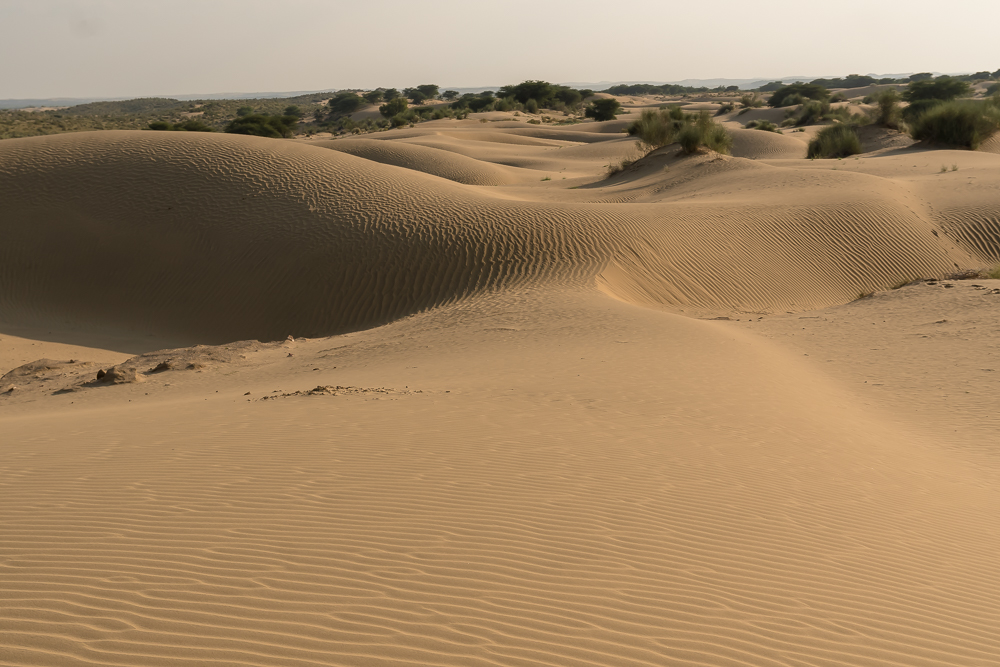 Sand dunes in the Thar Desert near Jaisalmer, one of the main reasons to go from Udaipur to Jaisalmer
