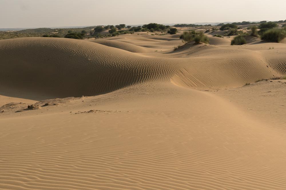 Sand dunes in the Thar Desert, near Jaisalmer